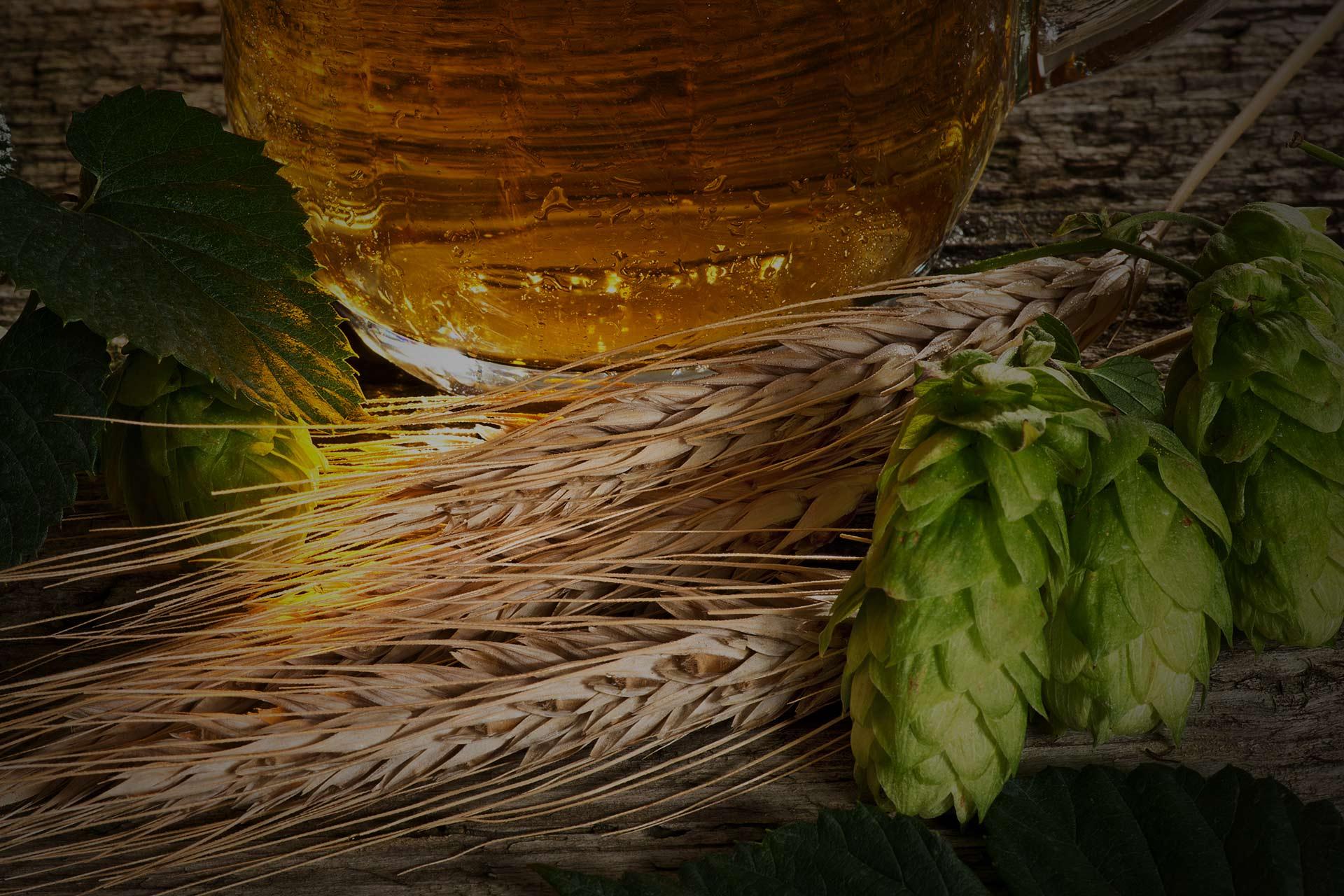 Les composants d'une bière